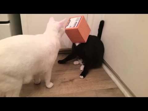 Kleenex Box Stuck On Cat's Head