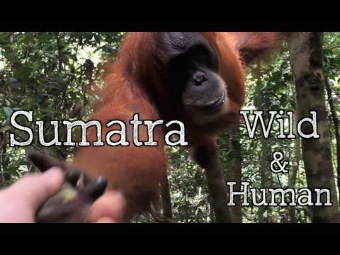 Sumatra - Wild & Human - INDONESIA