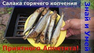 Салака горячего копчения. Как коптить рыбу в домашних условиях