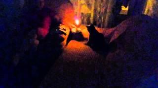 Кошка и свечка