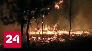 В Португалии горит 500 гектаров леса - Россия 24