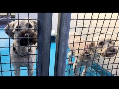 Huge Puppy Mill Bust In B.C.