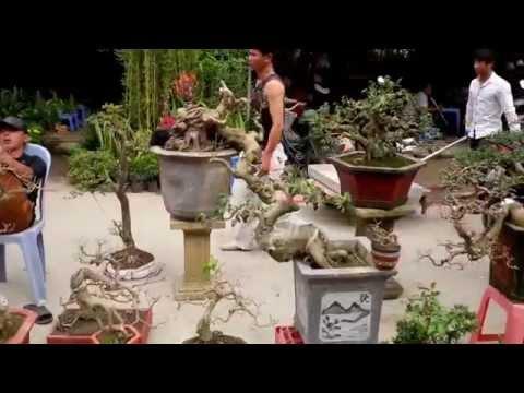 bonsai market -cho cay canh Ha Dong