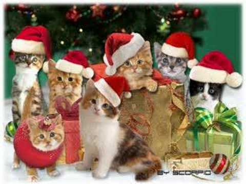 Merry Christmas from the Jingle Cats
