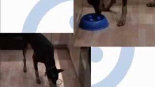 Proselect Slow Feeder Bowl From Brake-fast