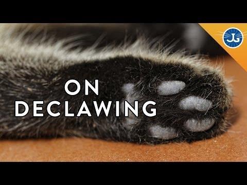 get off cat & dog repellent spray reviews