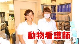 ひばり動物病院 http://hibari-vc.jp/ 教えてセンパイ連続再生 https://...