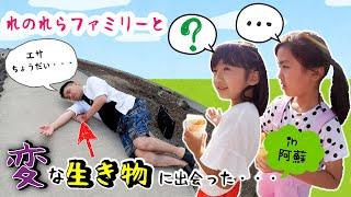 以前からちょくちょく仲良くさせていただいていたれのれらTVさんが 熊本に遊びに来られました。 阿蘇で熊本の郷土料理を食べて、ファームランドであそびました。 そこで変な ...