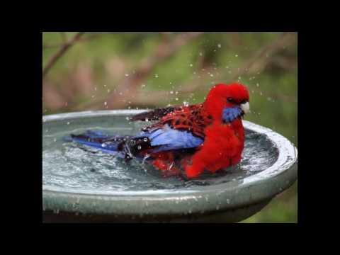 Birds Take a Bath - Bezzy Feat. BigO & Spun Sober