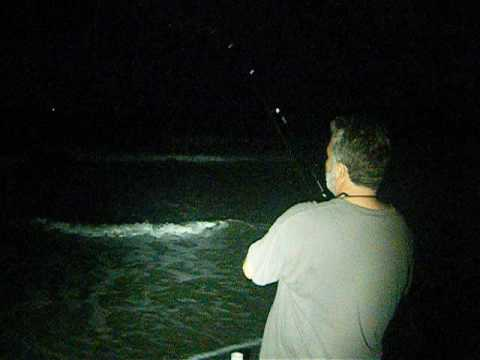Overnight surf fishing cocoa beach fl florida fish from for Surf fishing at night