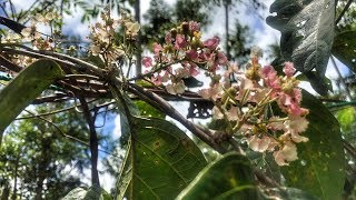 Джунгли Амазонки. Диета Аяхуаска. Перу