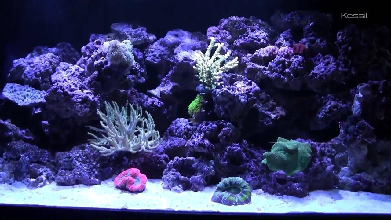 kessil a150w ocean blue with caesar s tropical fish youtube