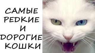 Самые редкие и дорогие #кошки в мире
