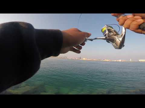Queenfish On Noeby Popper Dec 21, 2018 Abu Dhabi
