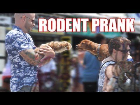 Rodent Prank