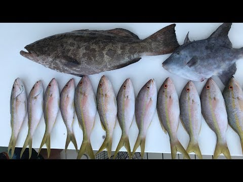 EASIEST Fish to CATCH in Florida Keys! Catch Clean Cook- Yellowtail Snapper