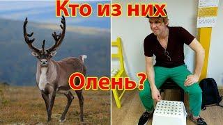 В Воронеже Погиб Северный Олень