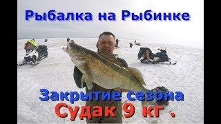 Рыбалка на Рыбинском водохранилище . Судак 9 кг .