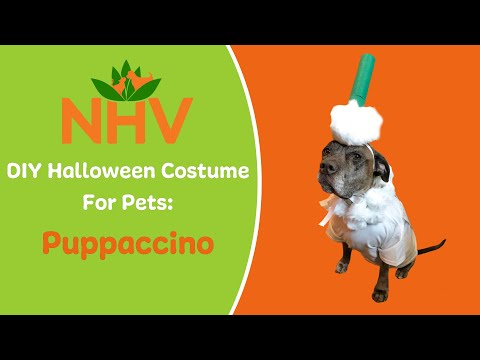 DIY Halloween Costume For Pets: Puppaccino