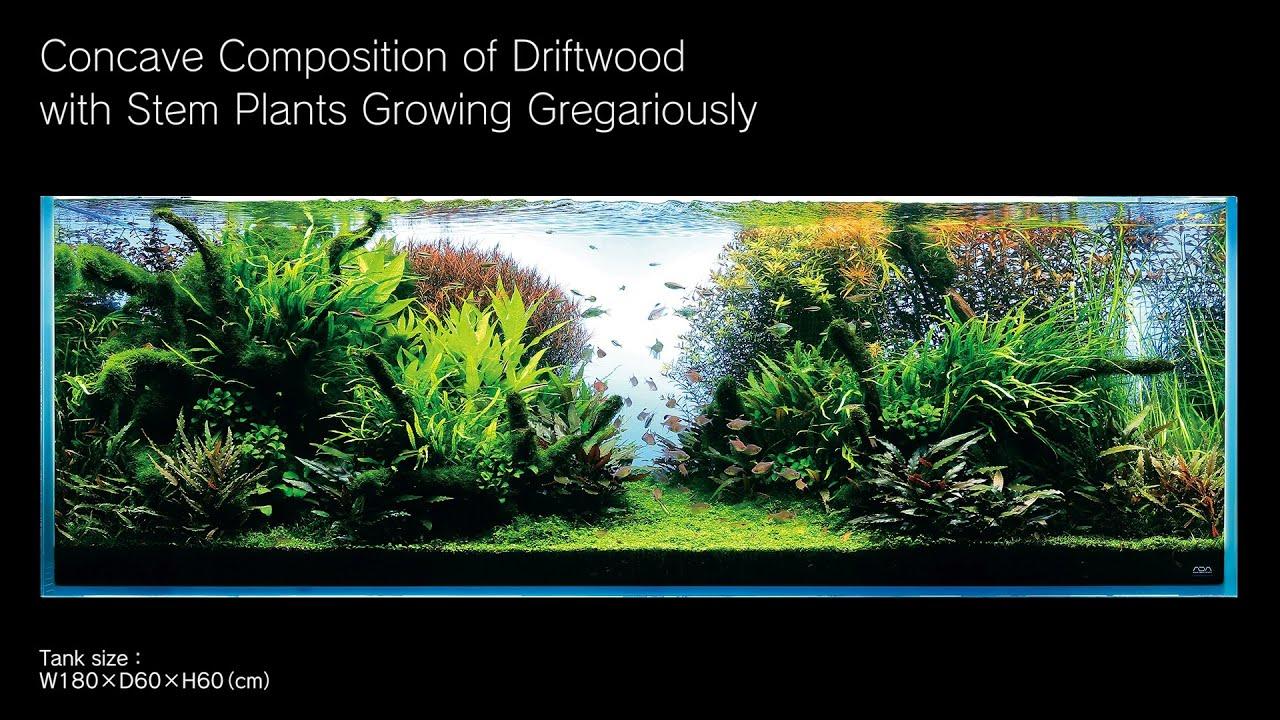 Adaview 180cm Aquarium Layout Concave Composition With Driftwood Ziolite Dan Aquascape Youtube