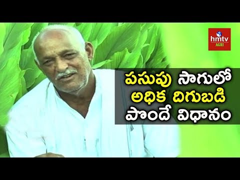 How to increase yield in Turmeric Cultivation | Ankapur Farm