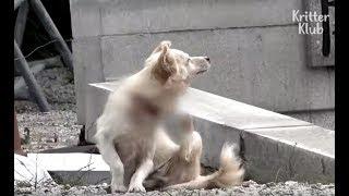 Dog Stays Strong For Her Puppies Despite Wire Around Her Neck (Part 1) | Kritter Klub