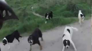 Repeat youtube video Mann wird von mehreren Hunden angegriffen.