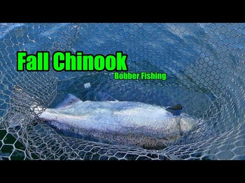 Oregon Fall Chinook Bobber Fishing! HARD HOOKSETS.