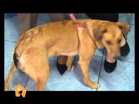 """""""Cani, gatti & c."""" – Animali in adozione nella puntata del 18 Aprile 2012"""