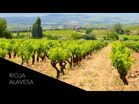 Where Tempranillo & Tradition Meet: A Wine Tour of Rioja Alavesa, Spain