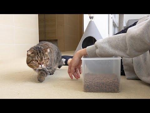 고양이 앞에서 사료통을 열고 죽은척