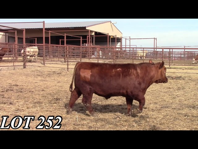 Mead Angus Farms Lot 252