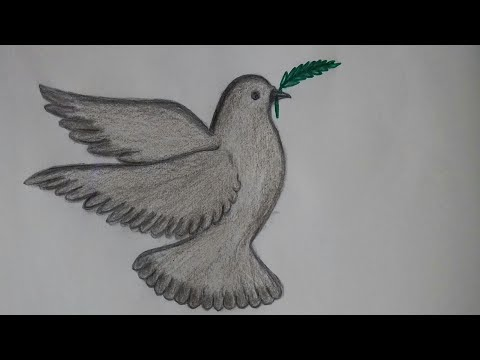 How To Draw Pigeon