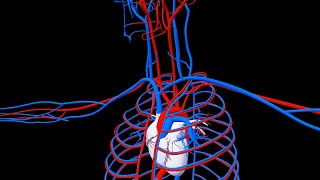 Royalty Free Medical Human Circulatory System HD Footage  - Heart CloseUp Footage