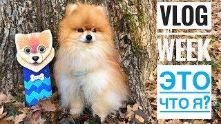 ВЛОГ: Вешалка для ОШЕЙНИКА,Температура тела собаки,Ненавистная жевачка