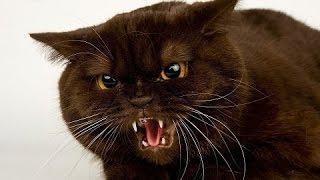 Жестокая драка котов!!! Сумасшедшие коты Путя и Митрос делят влияние