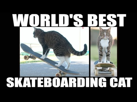 World s Best Skateboarding Cat Go Didga Go