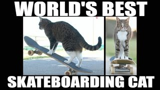 World's Best Skateboarding Cat! Go Didga Go!'