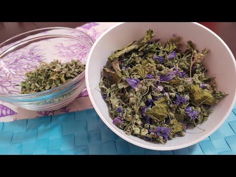 Come essiccare e preparare le erbe per le tisane - proprietà e benefici