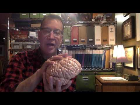 Neuroanatomy:  Directional terms 1