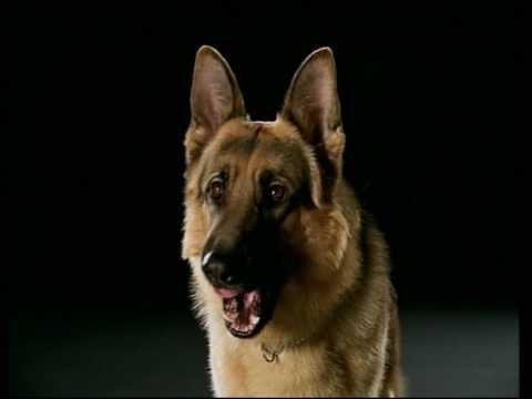 HD 720p Rex chien flic  Générique HD Saisons 6 & 7
