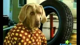 Dog Mechanic