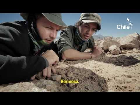 Wild Atacama Desert