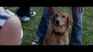 Собачья жизнь ⁄ A Dog's Purpose (2017) Дублированный трейлер HD.p4
