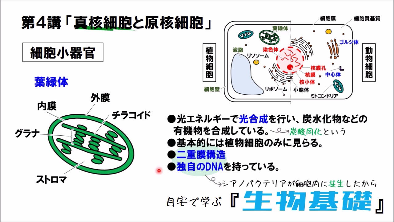 と 細胞 原核 の 真 核 違い 細胞