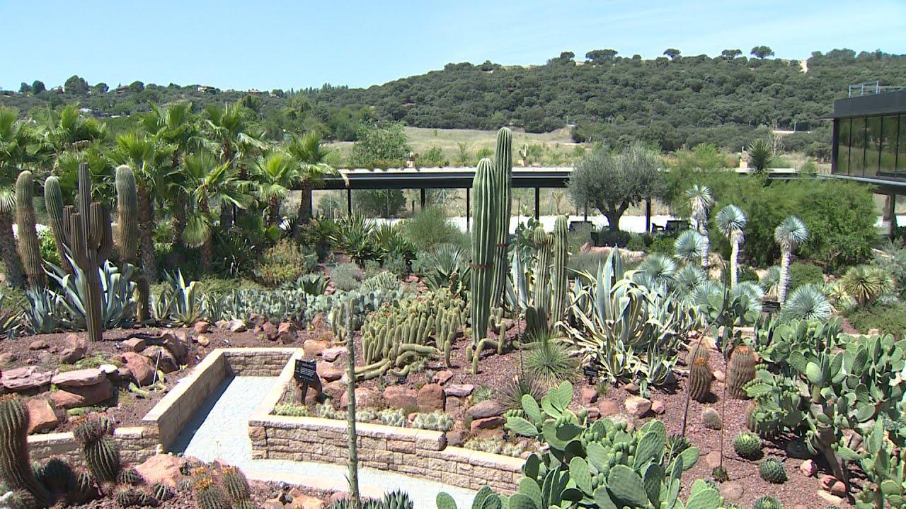 Desert city el oasis de cactus que llega a madrid youtube for Jardin cactus madrid