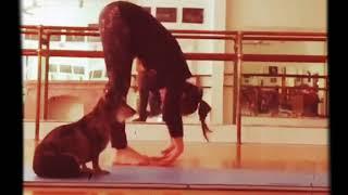 Upward Facing Dog