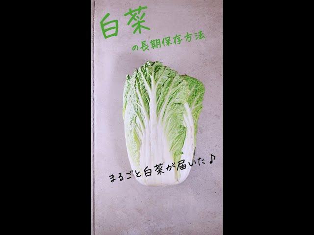 白菜の長期保存方法-みためとあじはちがう店-