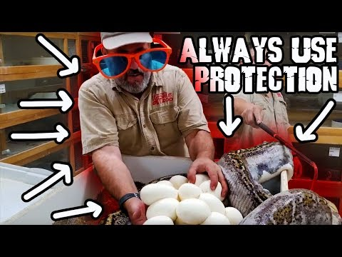 Always Use Protection with Big Snakes