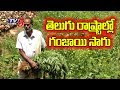 Special Discussion on Ganja Cultivation in Telugu States